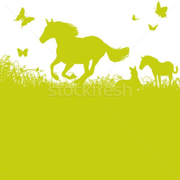 Horses on pasture Stock photo © Ustofre9
