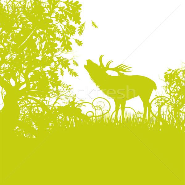 鹿 森林 草 地図 自然 風景 ストックフォト © Ustofre9