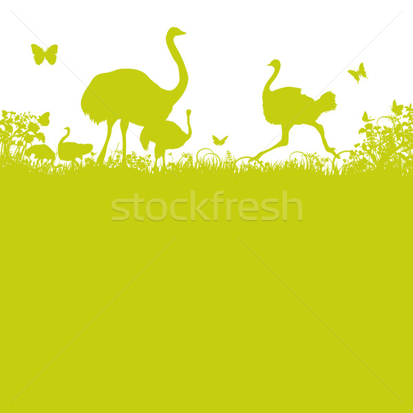 Ostrich and ostrich herd  Stock photo © Ustofre9