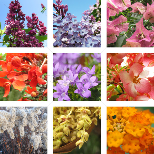 Nine garden flowers  Stock photo © Ustofre9