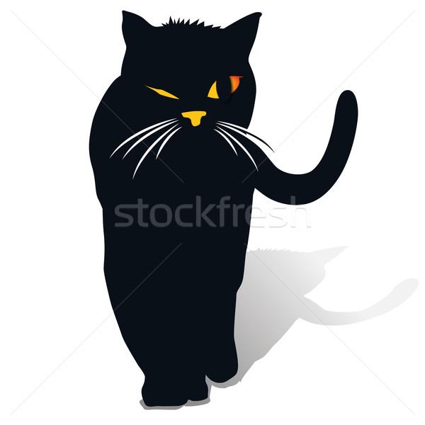 A black cat  Stock photo © Ustofre9