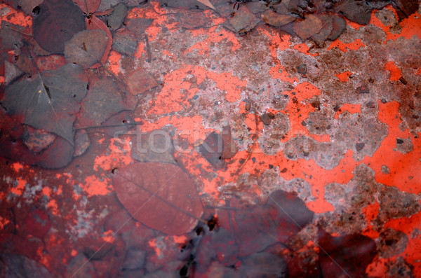 Rust and wet leaves in the water Stock photo © Ustofre9