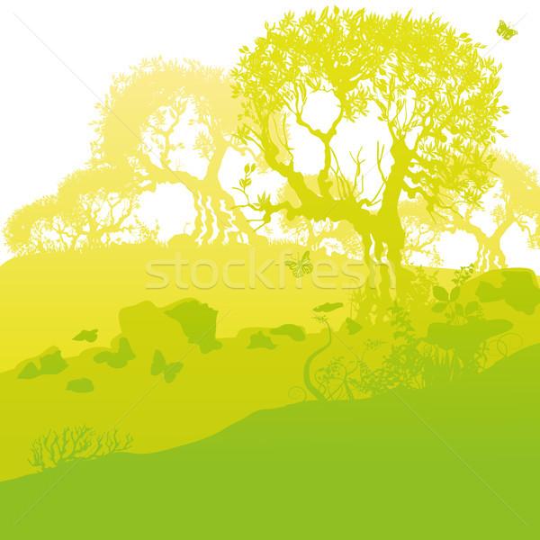 ストックフォト: 古い · オリーブ · 木 · 丘 · 春 · 草