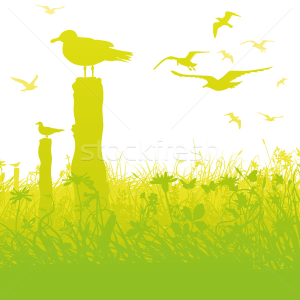 Seagulls in the swamp and tall grass Stock photo © Ustofre9