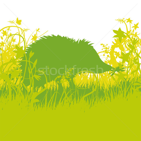 Stock photo: Young hedgehog in the undergrowth