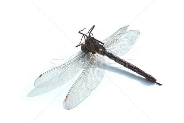 Halott szitakötő természet halál levegő rovar Stock fotó © Ustofre9