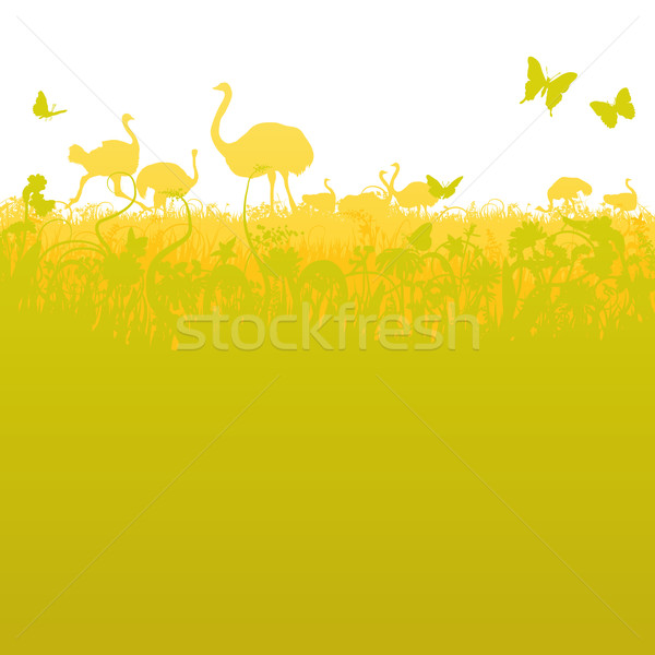 Ostrich and ostrich herd  in the savannah  Stock photo © Ustofre9