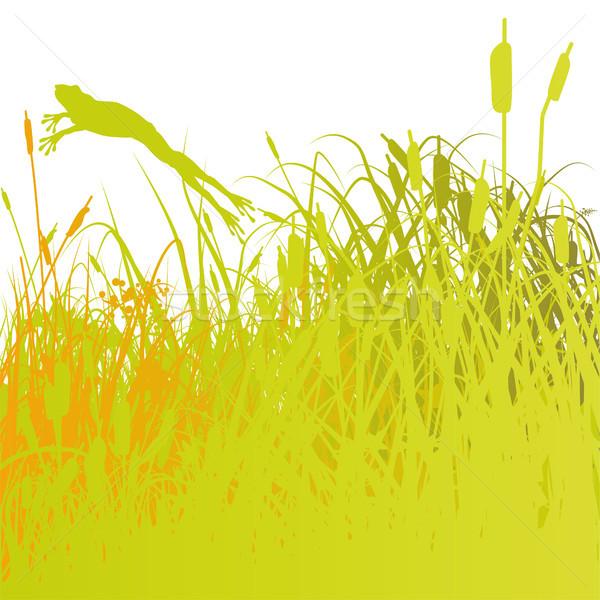 ストックフォト: カエル · 池 · 草 · 学校 · 地図 · 風景