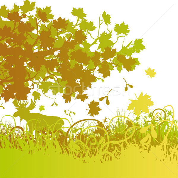 Mixed forest in autumn Stock photo © Ustofre9