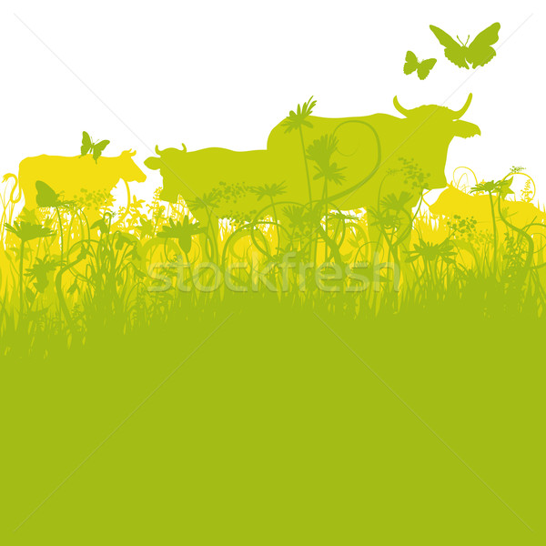 Cows on pasture Stock photo © Ustofre9