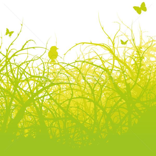 Fiatal madár bozót fű tájkép háttér Stock fotó © Ustofre9