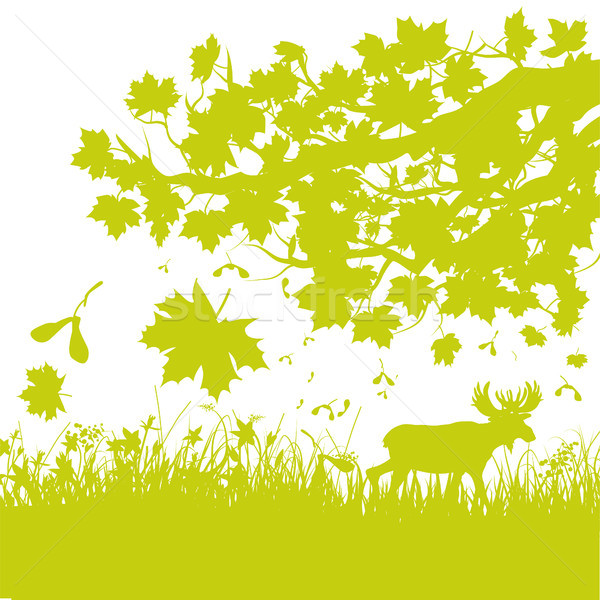 Falling leaves in autumn forest Stock photo © Ustofre9