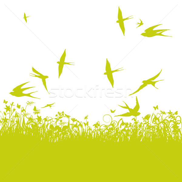 Swallows in the spring Stock photo © Ustofre9