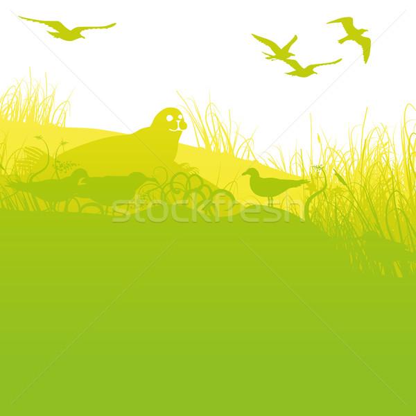 シール 海岸 カモメ ビーチ 自然 風景 ストックフォト © Ustofre9