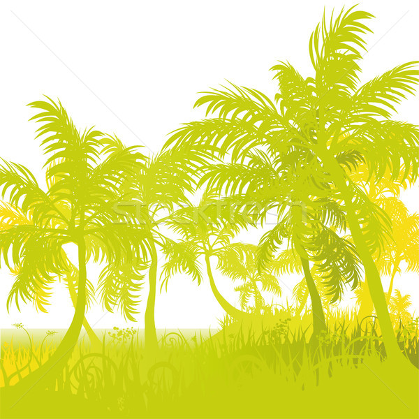 Palms on the beach Stock photo © Ustofre9
