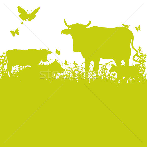 Cows on the meadow Stock photo © Ustofre9