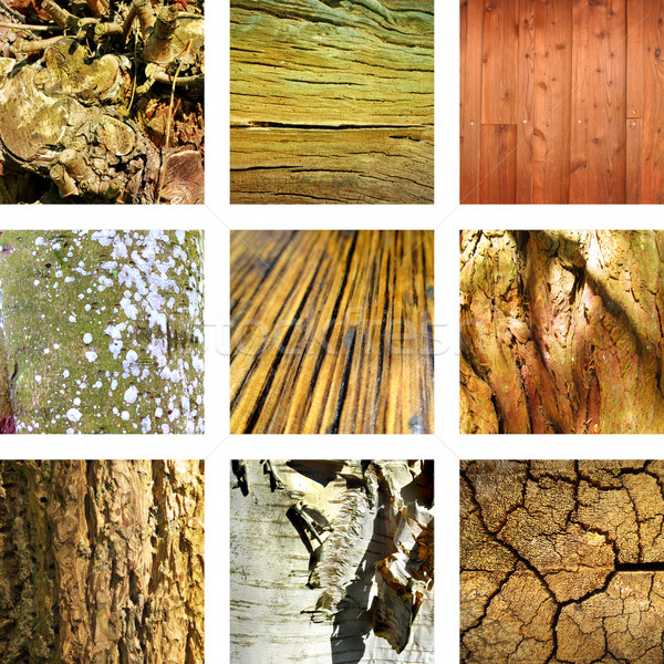 Nine images of wood and tree structures Stock photo © Ustofre9
