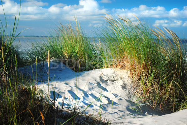 Dune and dune grass Stock photo © Ustofre9