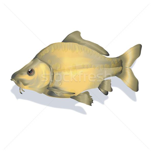Karper vis natuur rivier tekening graphics Stockfoto © Ustofre9