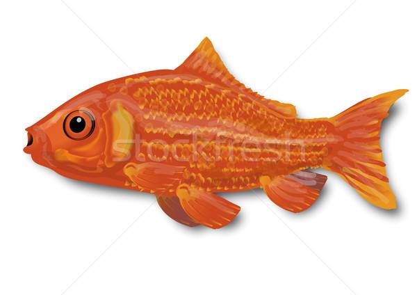 Piccolo Goldfish acqua pesce fiume oro Foto d'archivio © Ustofre9