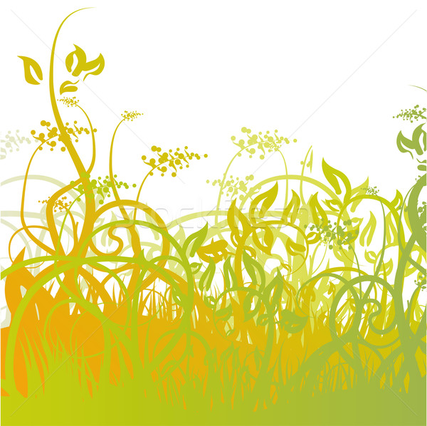 Grass and flower seeds in the meadow Stock photo © Ustofre9