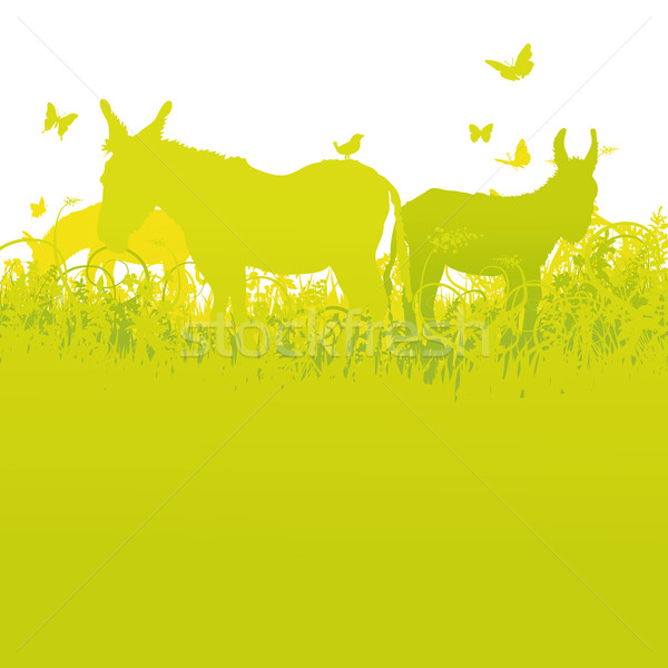 Three donkeys on the summer meadow  Stock photo © Ustofre9