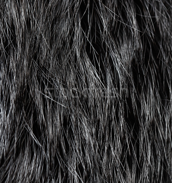 Fur texture Stock photo © vadimmmus