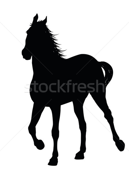 Vector horse Stock photo © vadimmmus