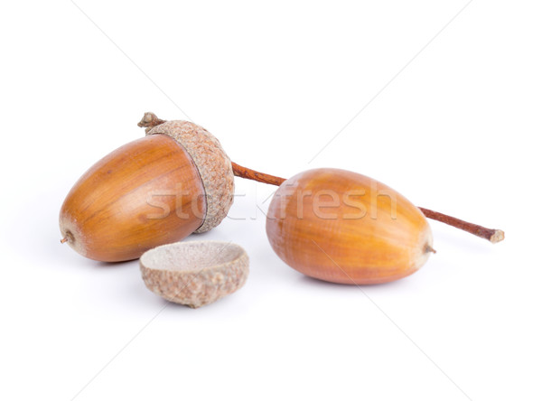 Acorns isolated Stock photo © vadimmmus