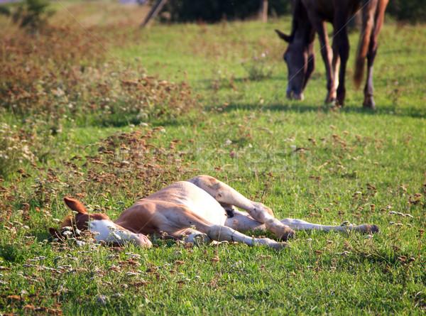 жеребенок лет пастбище небе трава лошади Сток-фото © vadimmmus