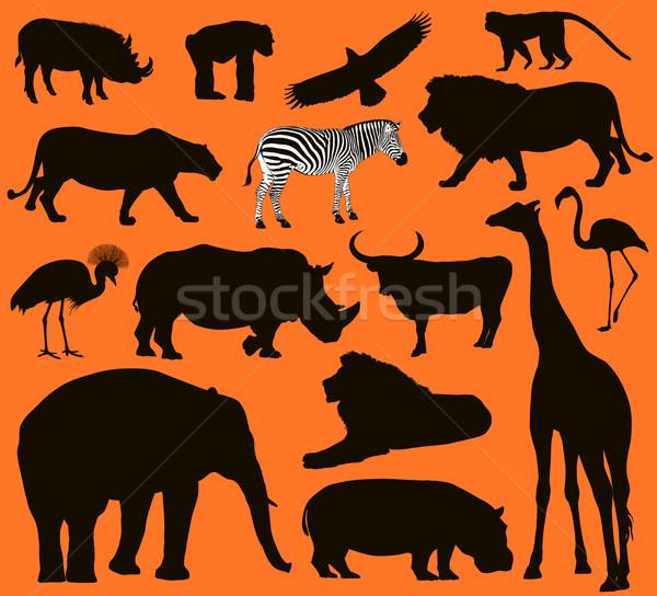 животные африканских набор прибыль на акцию 10 Сток-фото © vadimmmus