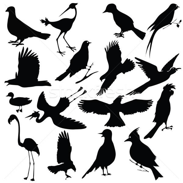 birds Stock photo © Valeo5