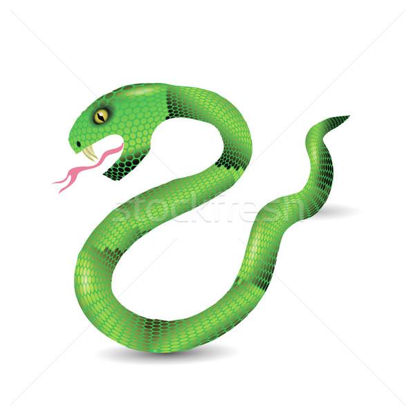 Cartoon zielone węże odizolowany biały ciało Zdjęcia stock © Valeo5