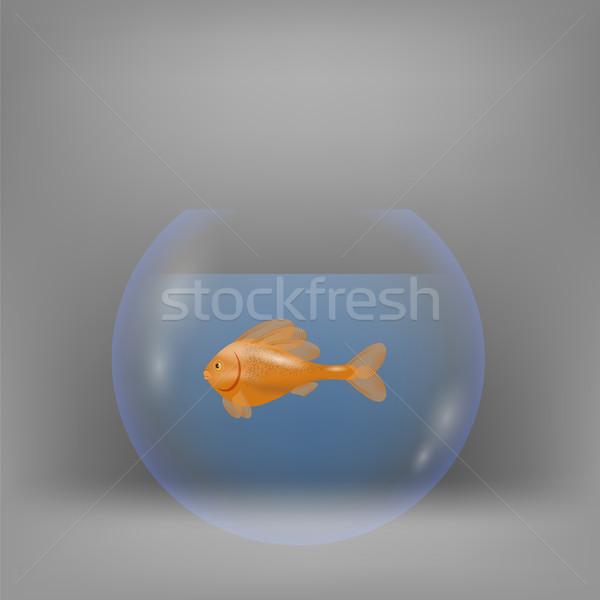 赤 水族館 ぼやけた グレー 水 魚 ストックフォト © Valeo5