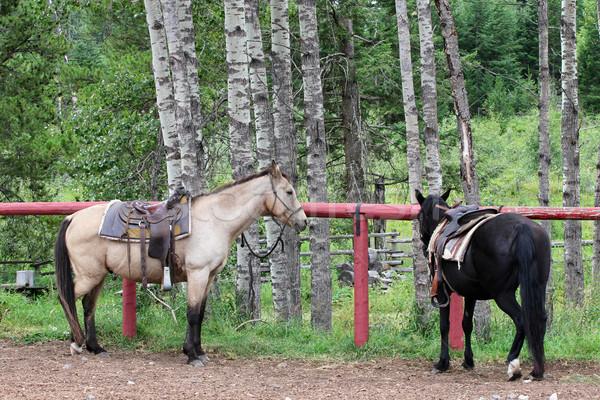 Trail horses Stock photo © vanessavr