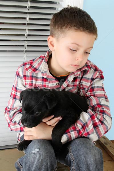 мальчика щенков красивой черный окна Сток-фото © vanessavr