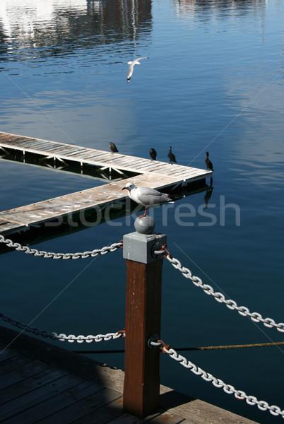 Zeemeeuw vergadering houten paal haven zee Stockfoto © vanessavr