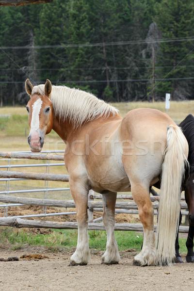 Horse Stock photo © vanessavr