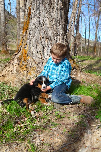мальчика щенков Бернский зенненхунд весны собака Сток-фото © vanessavr