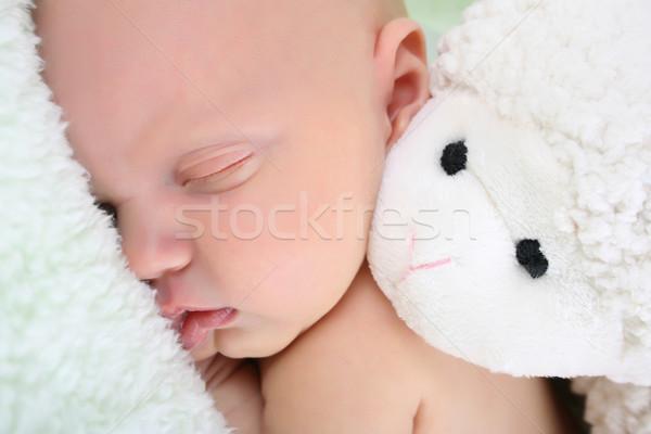 спальный красивой пушистый Сток-фото © vanessavr