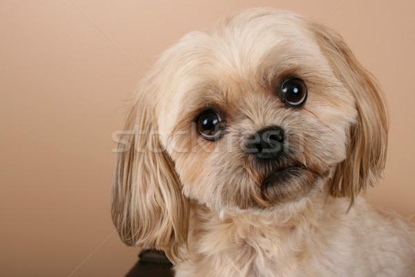 Dog Stock photo © vanessavr