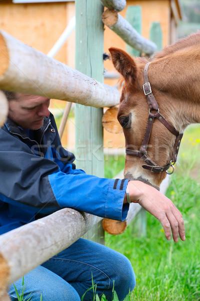 Colt and farmer Stock photo © vanessavr