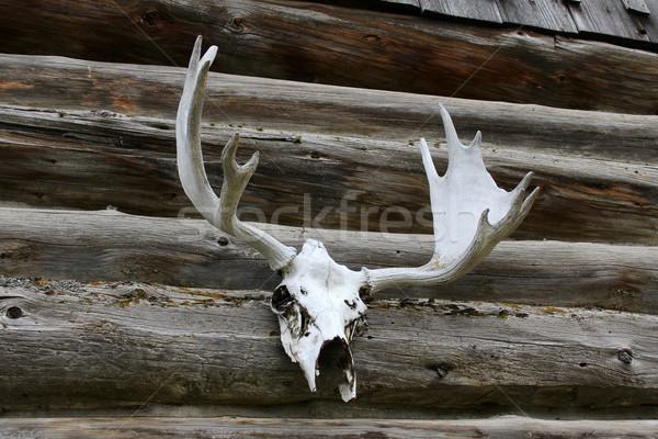 Cabine fora parede madeira porta Foto stock © vanessavr
