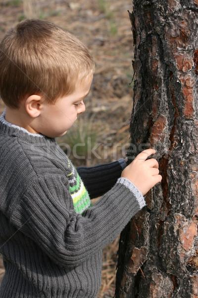 Boy chipping bark Stock photo © vanessavr