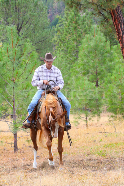 Młodych cowboy jazda konna konia dziedzinie biały Zdjęcia stock © vanessavr