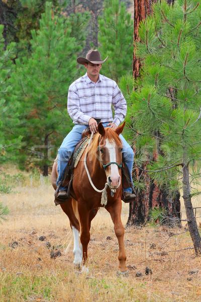 Cowboy werken paard veld man jeans Stockfoto © vanessavr