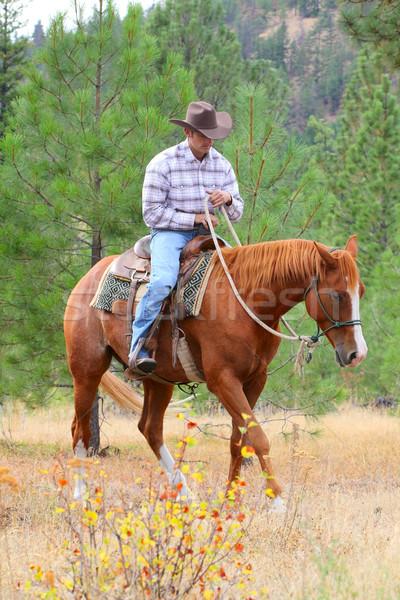Cavalo treinador jovem vaqueiro treinamento cavalos Foto stock © vanessavr
