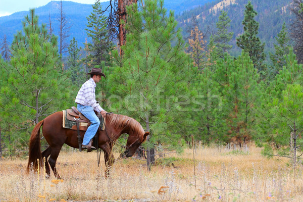 лошади тренер молодые Cowboy подготовки лошадей Сток-фото © vanessavr