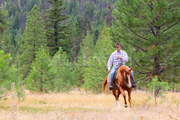 Vaqueiro trabalhando cavalo campo homem jeans Foto stock © vanessavr