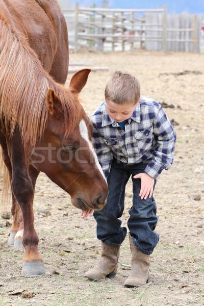 Horse Treats Stock photo © vanessavr